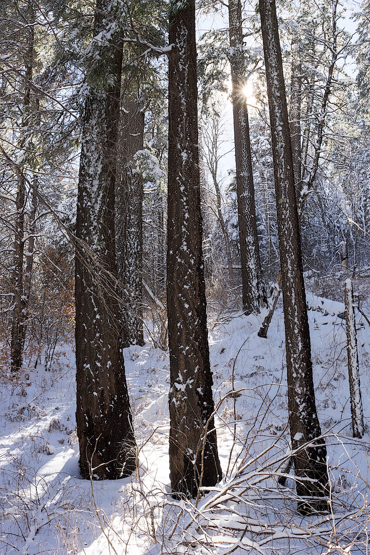Sun and snow on the Aspen Draw Trail. December 2014