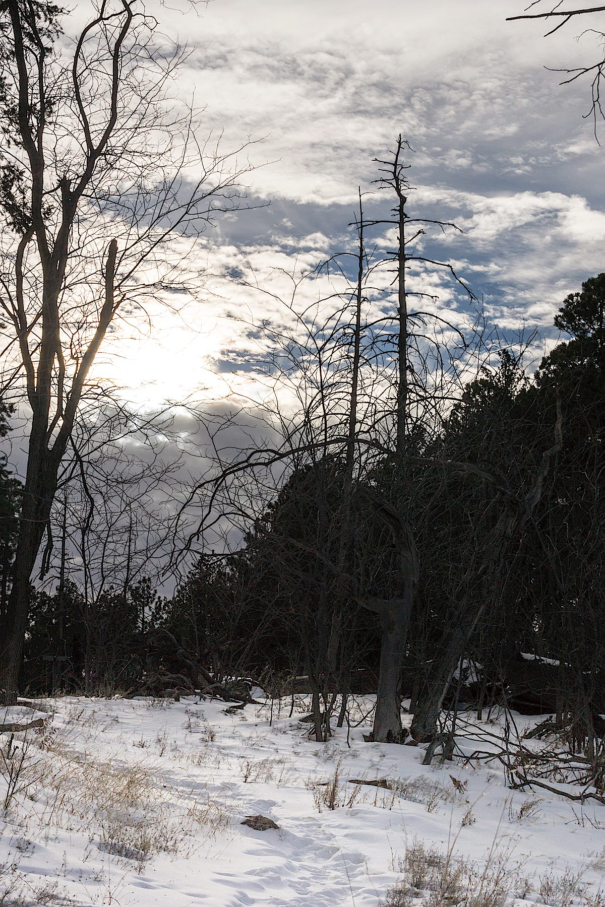Snow at the junction of the Kellogg Mountain, Butterfly and Bigelow Trails. December 2014