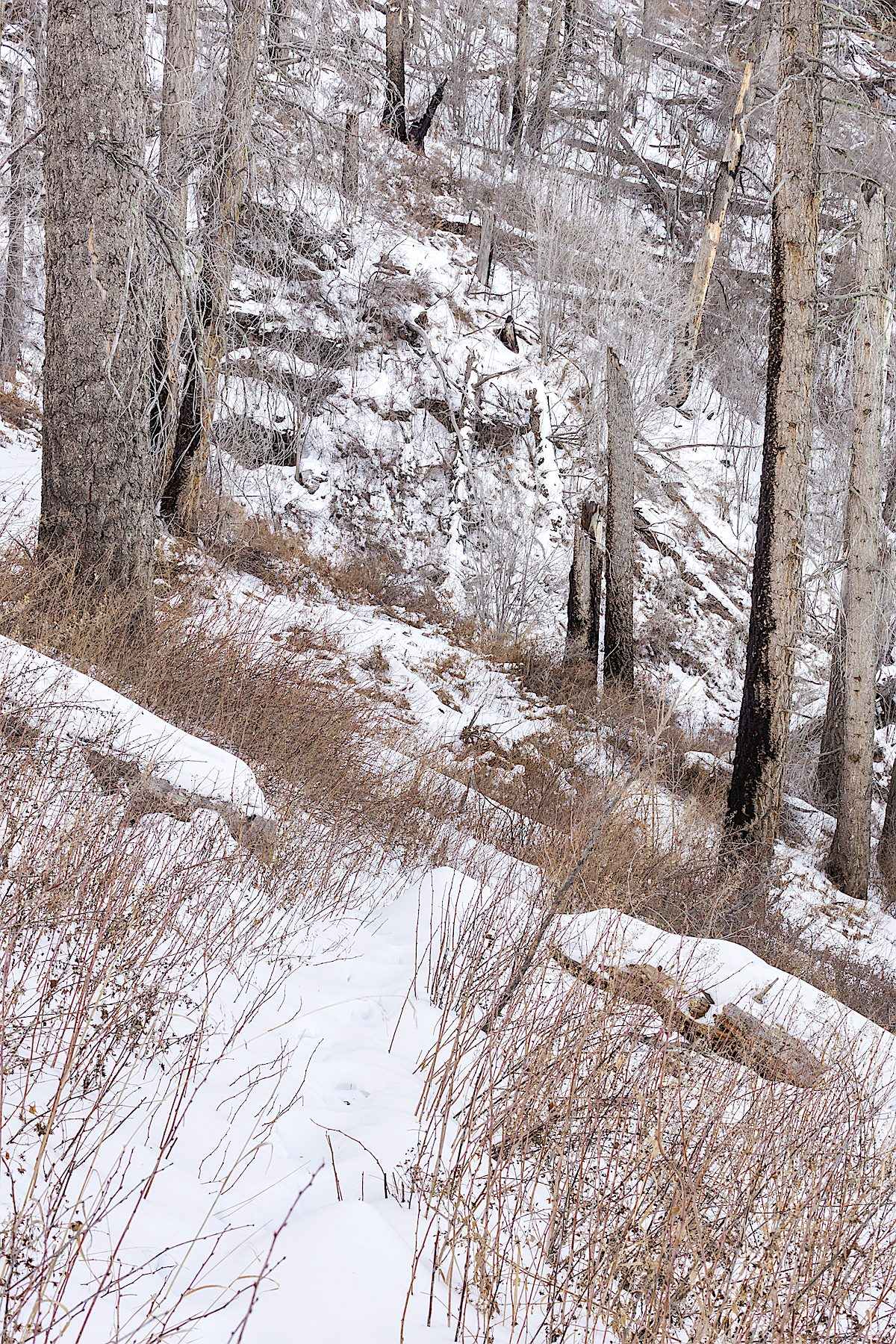 Snow on the Butterfly Trail below Mount Bigelow. December 2014
