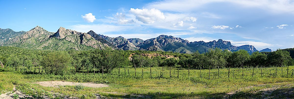 A beautiful view of Pusch Ridge from the Golder Ranch South parking area. August 2017.