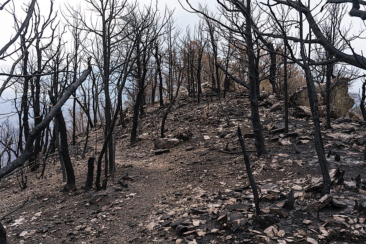Near the summit of Guthrie Mountain several weeks after the 2017 Burro Fire. July 2017.