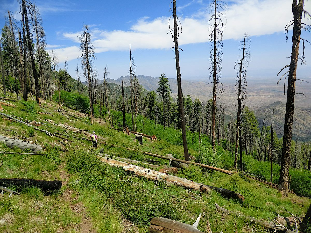 The top of the Knagge Trail - much of this trail has been impacted by fire and sections of the trail were overgrown and hard to find after the summer rains in 2013. May 2012.