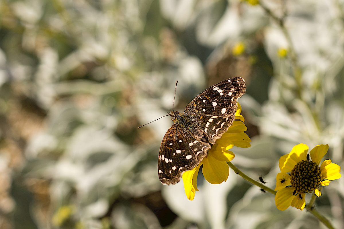 Butterfly near the La Milagrosa Trail. December 2014.