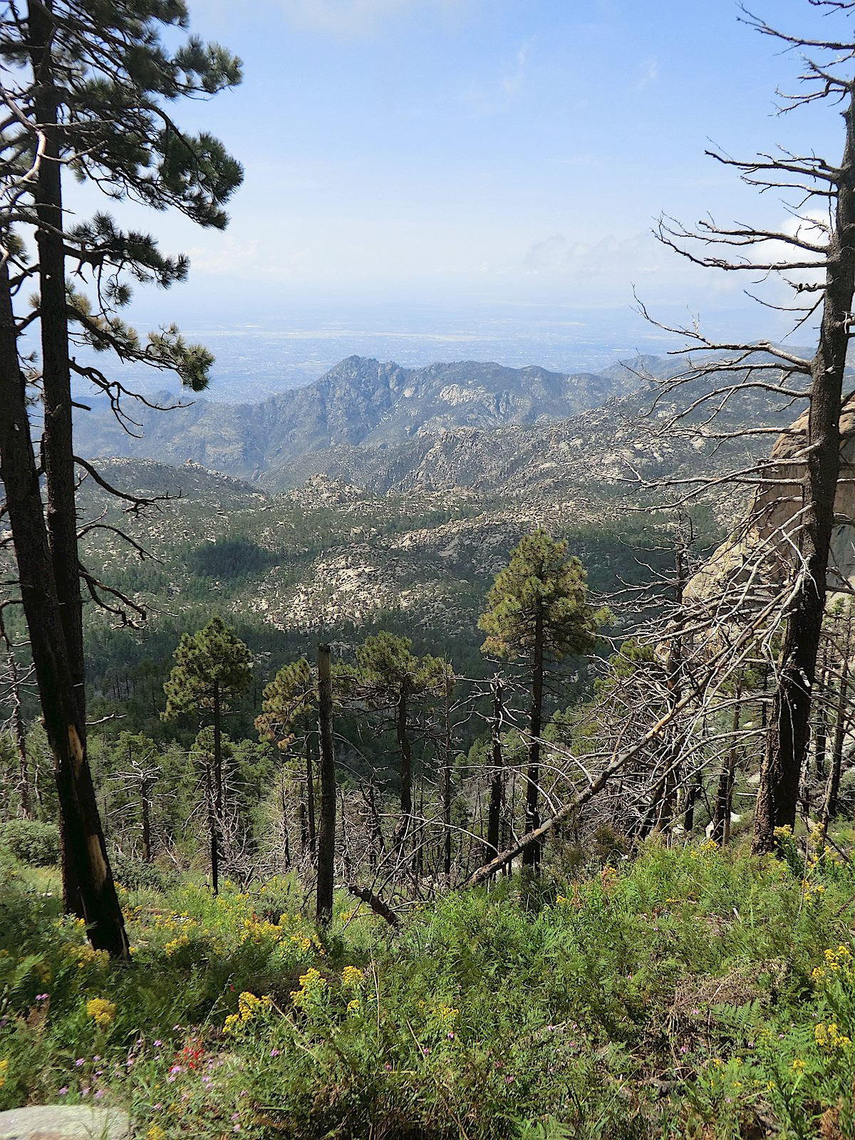 A view from the Lemmon Rock Trail. August 2012.