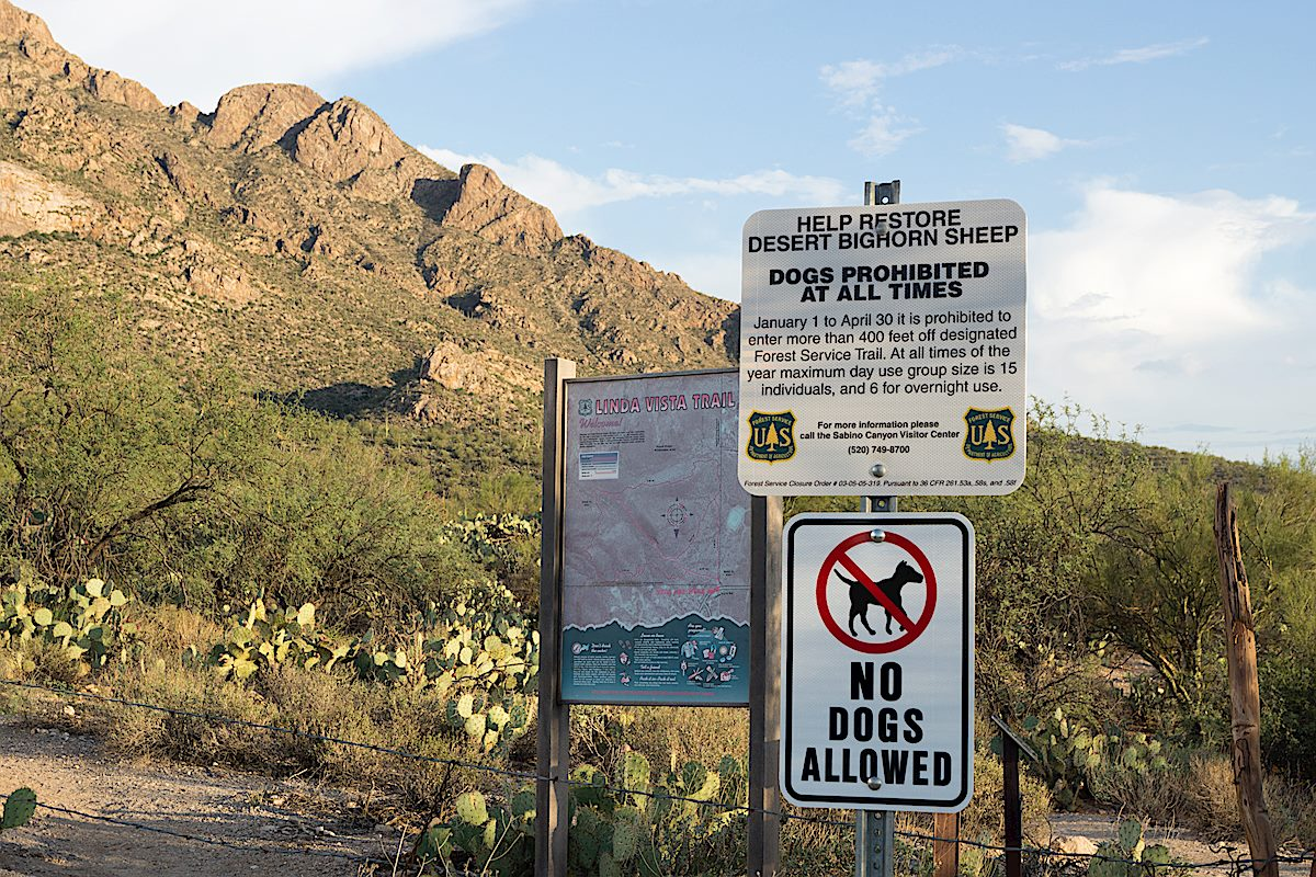 Bighorn Restriction signs at the Linda Vista Trailhead. August 2014.