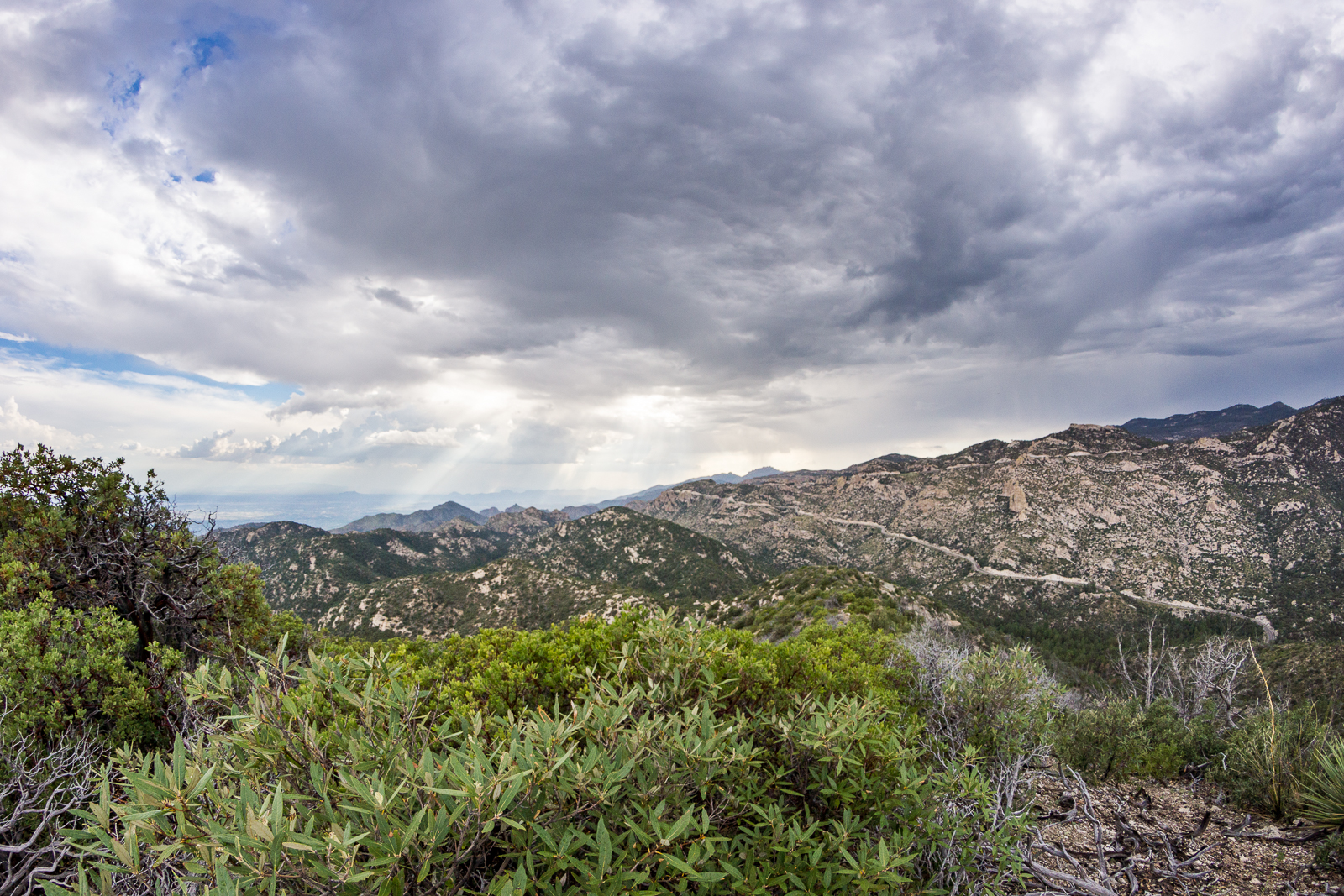 Looking across Bear Canyon from Point 6810 on the ridge east of Bear Canyon. August 2015.