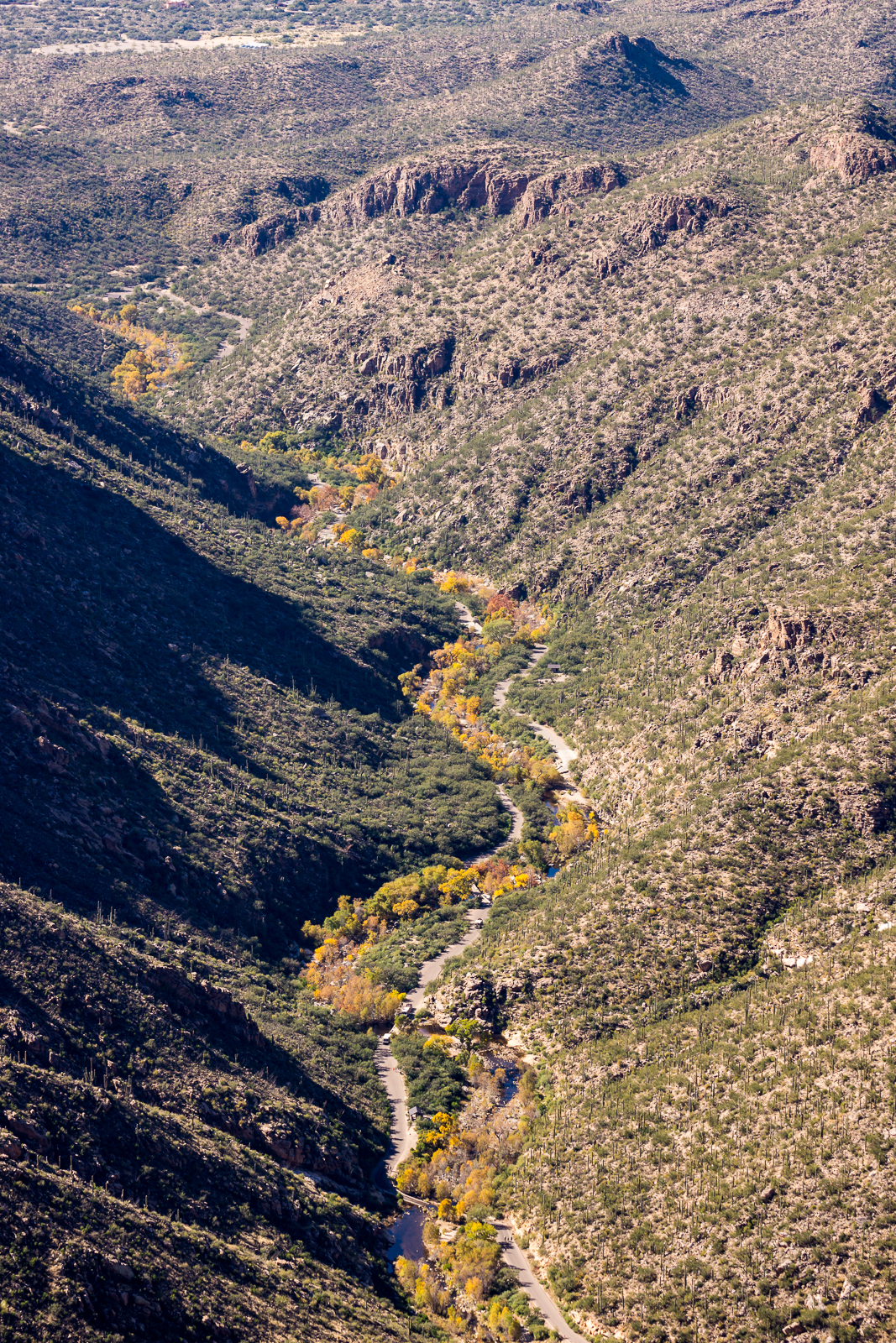 Looking down Sabino Canyon, a ribbon of color in the desert - from just below the base of Thimble Peak. November 2015.