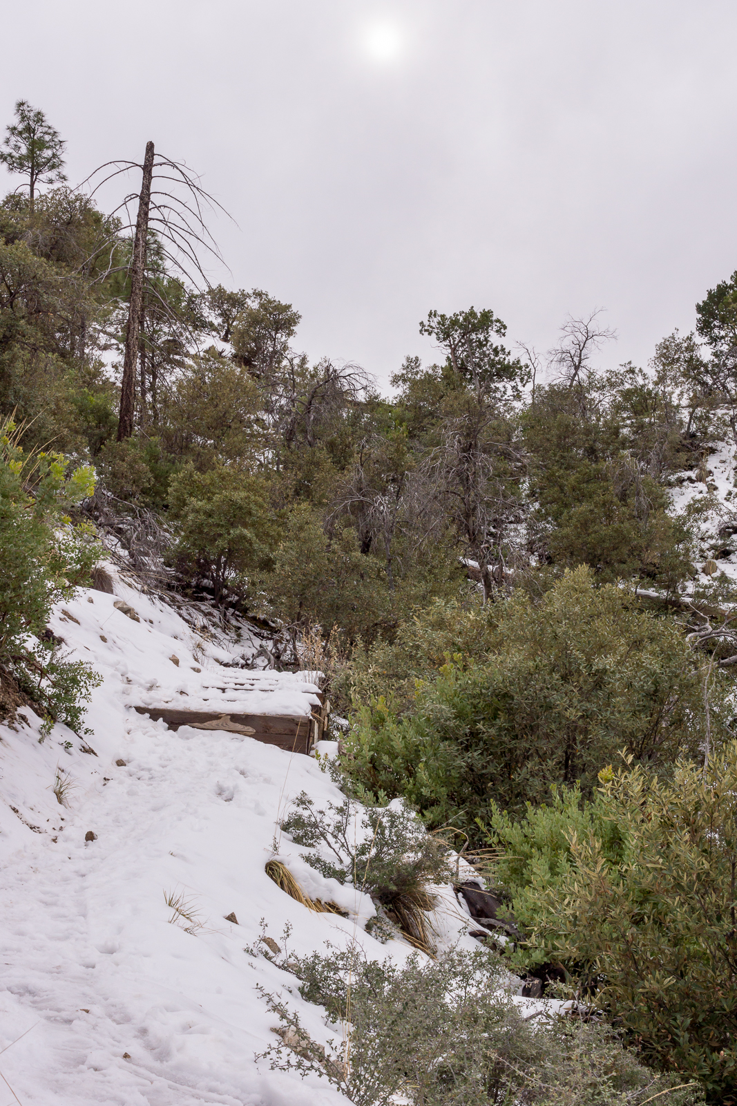 Snow on the Bug Spring Trail above Bear Canyon. December 2015.