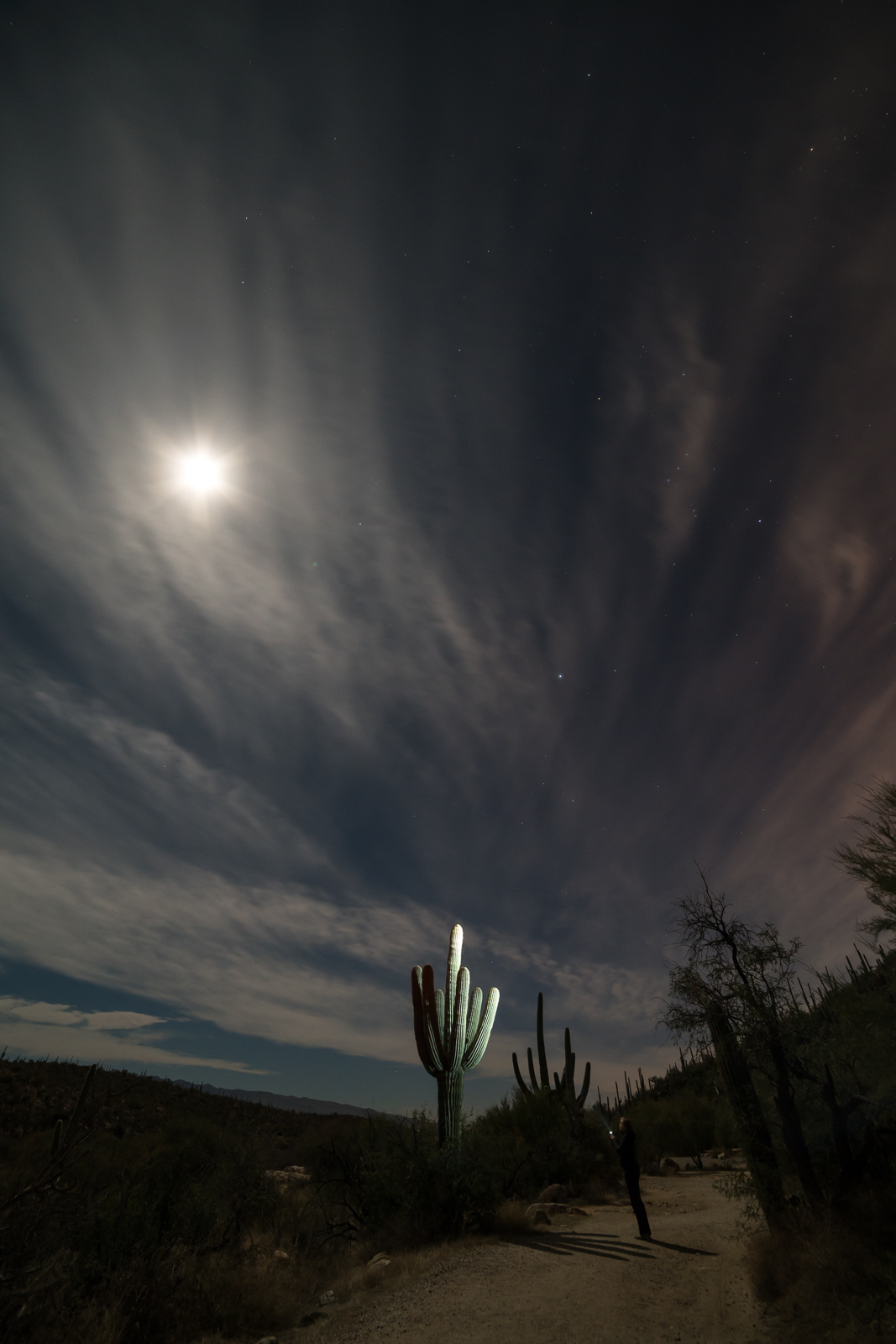 Moon, Saguaro in headlamp light - on the way back from the dam in Lower Sabino Canyon. January 2016.