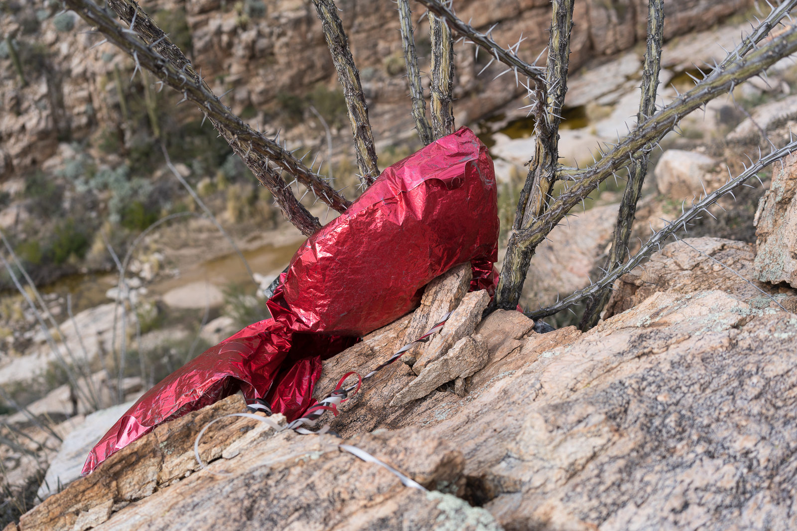 Balloon - trash on a hillside above La Milagrosa Canyon - there was a 2nd balloon below... February 2016.