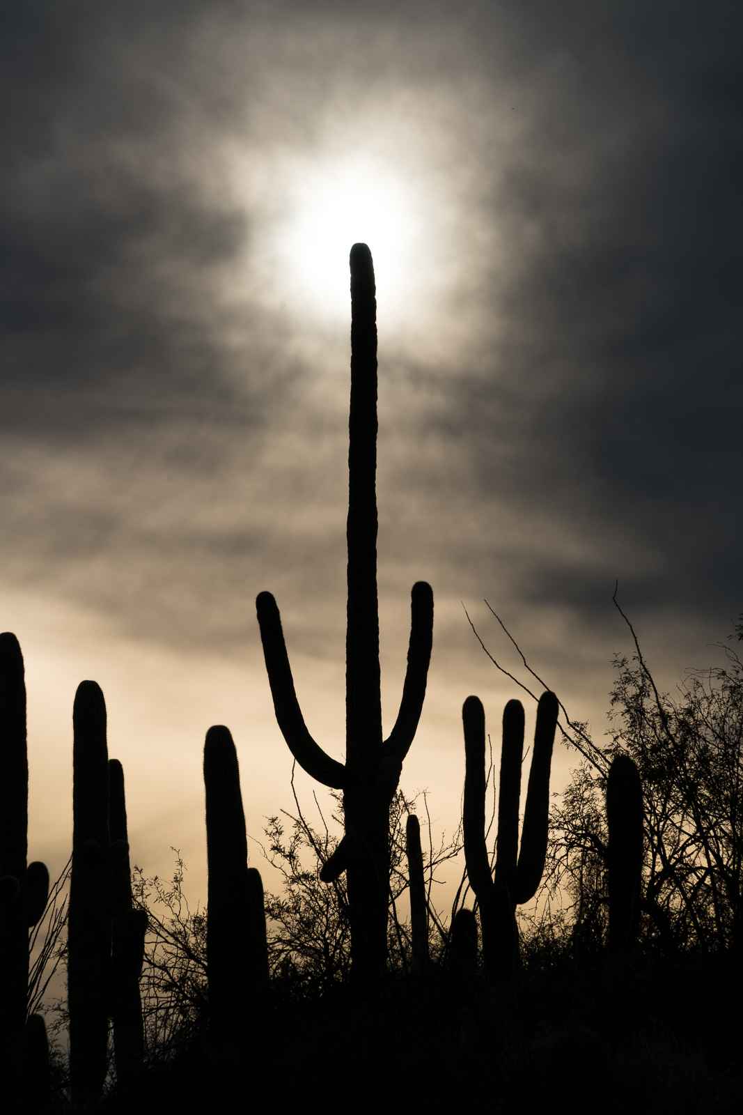 Saguaro and Sun from the La Milagrosa Trail. February 2016.