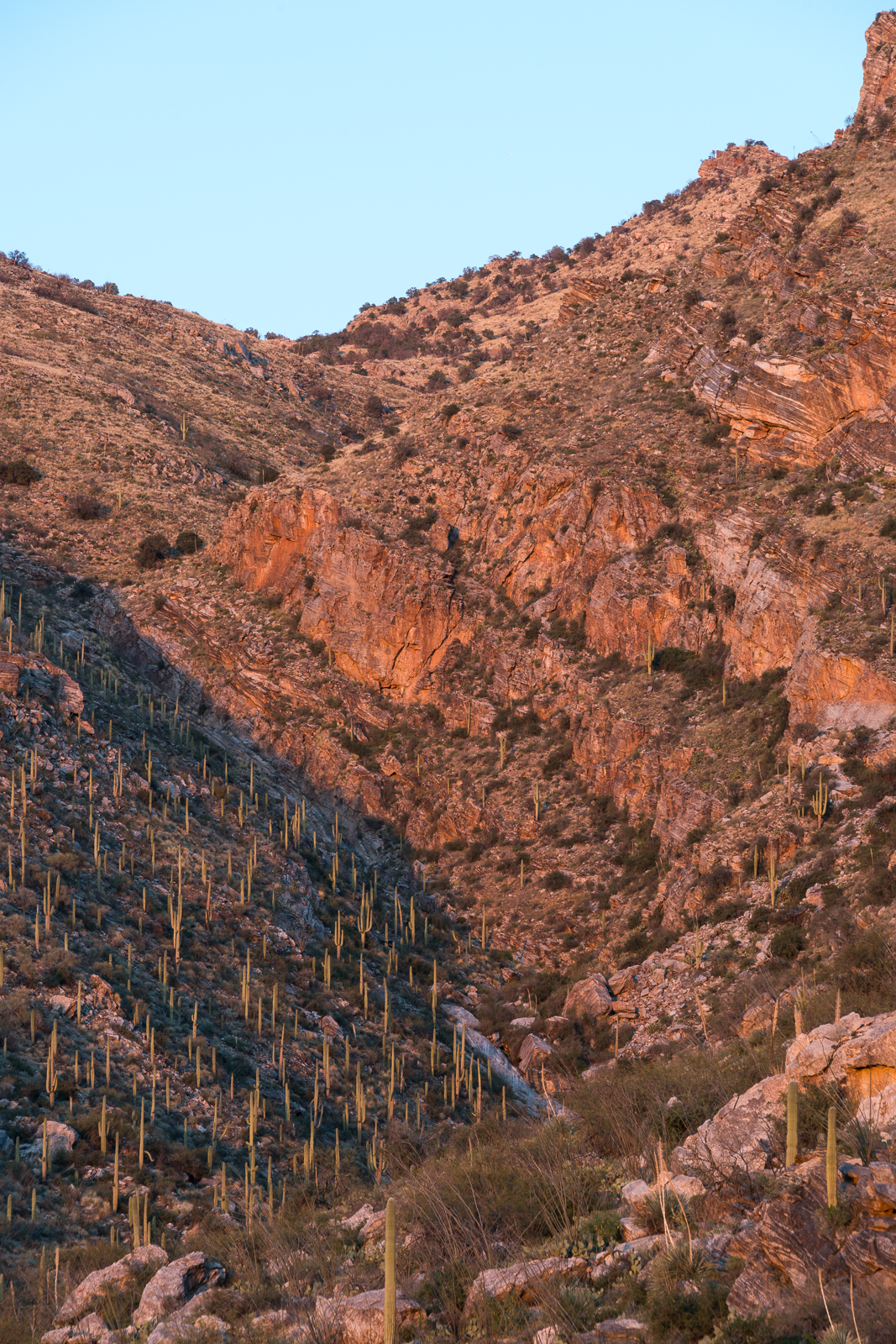 Sunset in Pontatoc Canyon. February 2016.