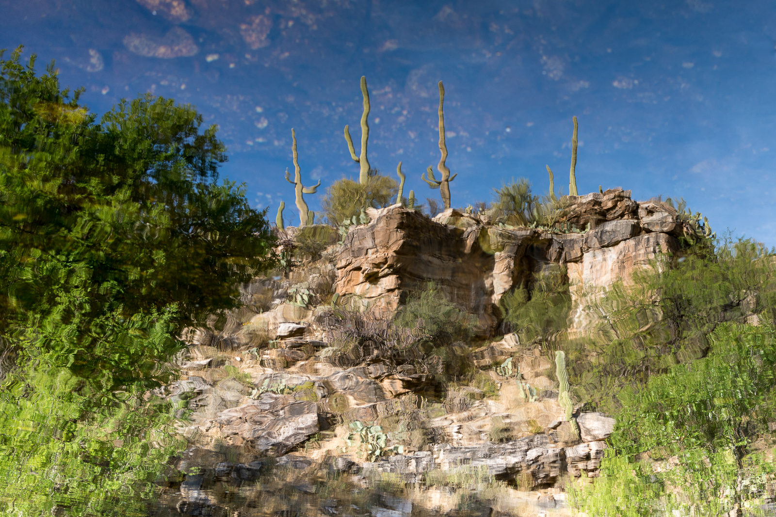 A reflection in Sabino Canyon in the old 'lake' area. March 2016.