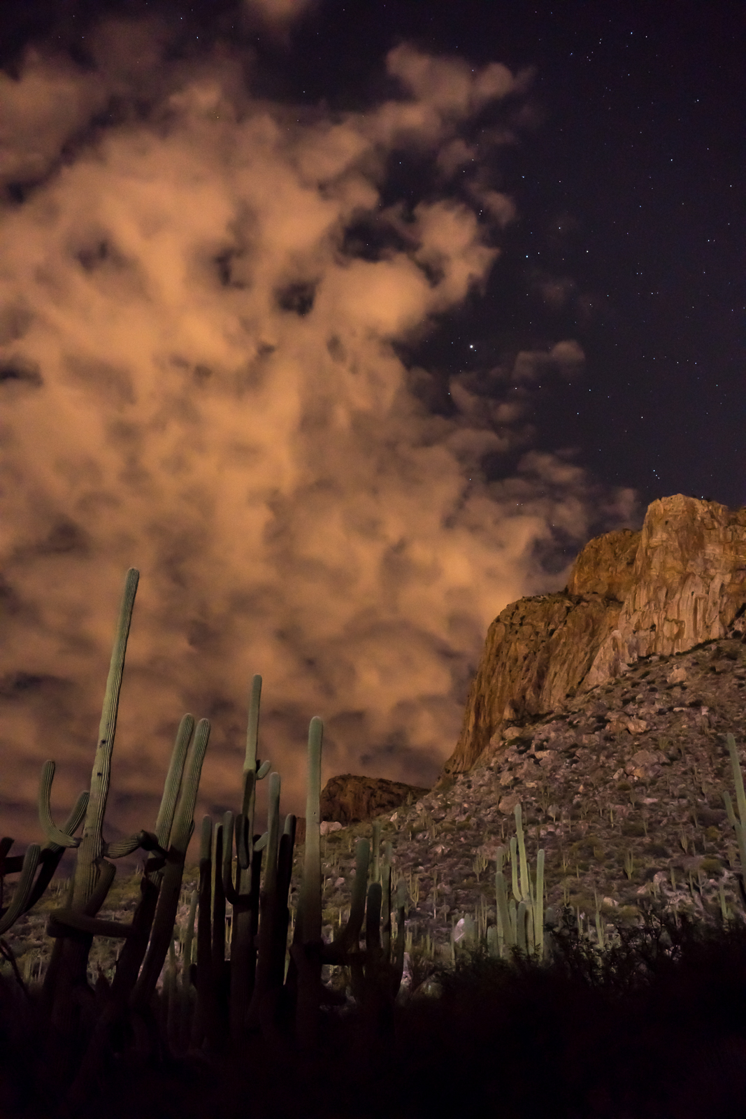 Saguaro, clouds, stars and Pusch Ridge from the Linda Vista Trails. April 2016.