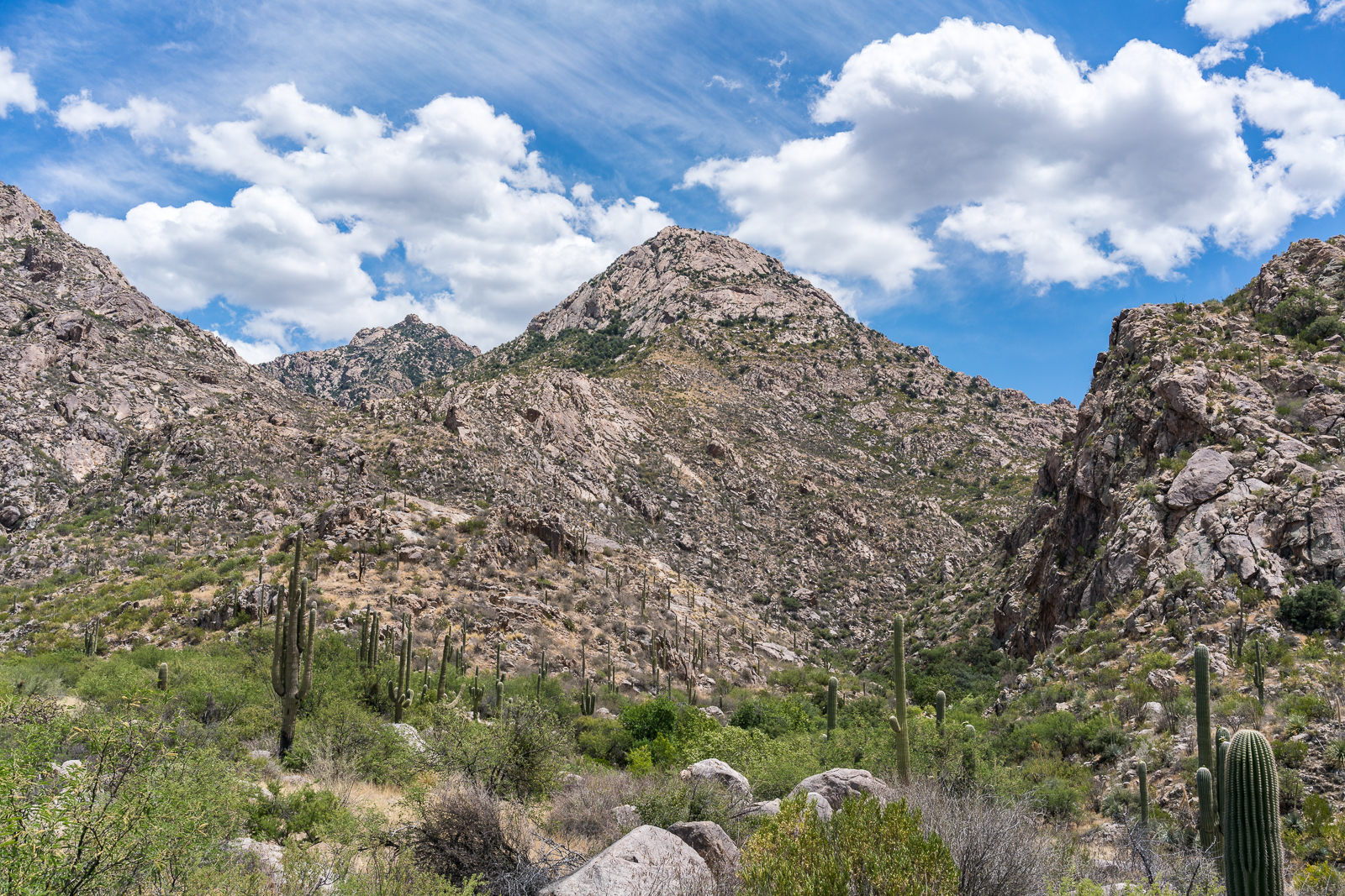 Looking up Romero Canyon. May 2016.