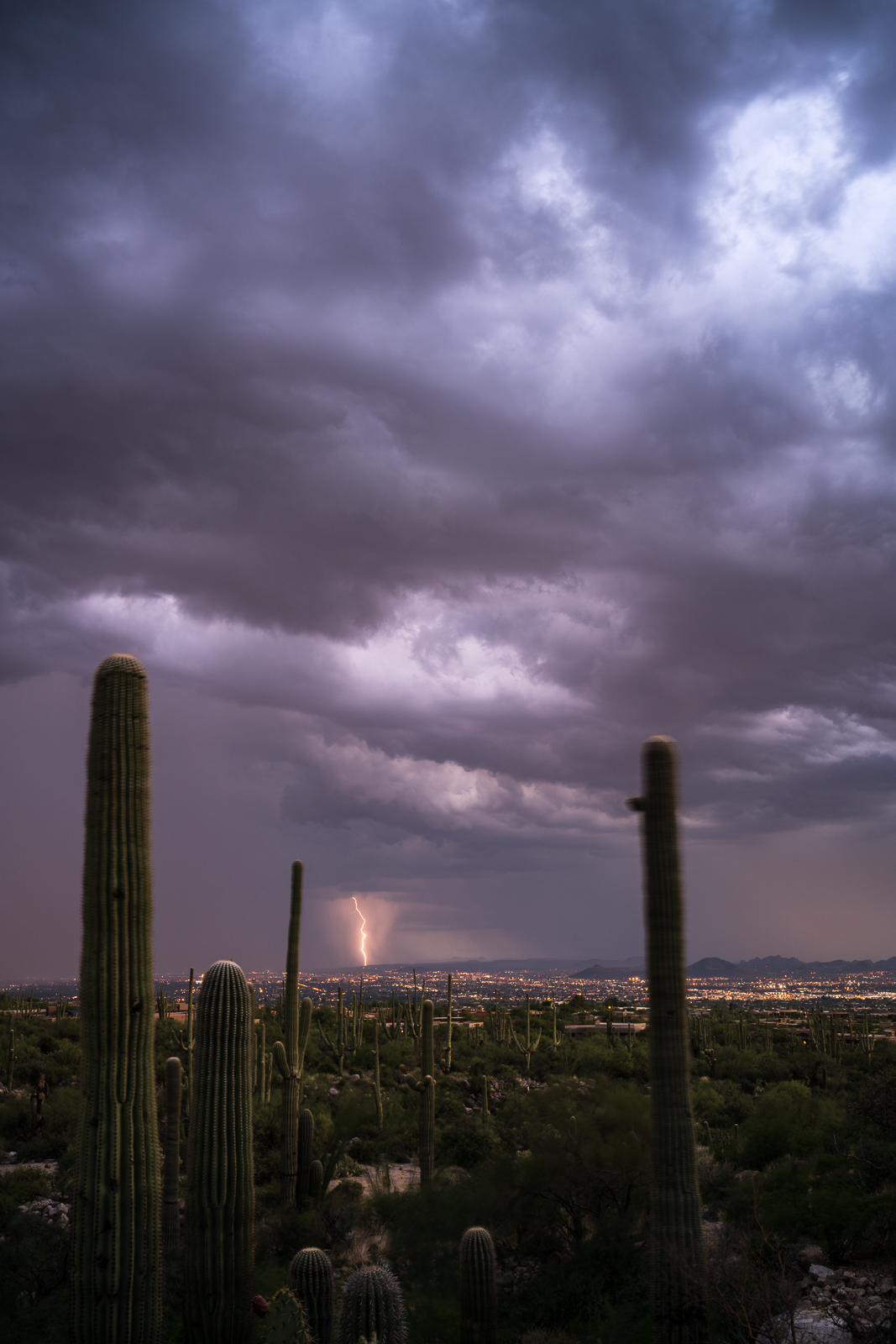 Lightning and a swaying saguaro from the Pima Canyon Trail. July 2016.