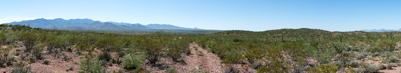 Seemingly endless creosote with the Santa Catalina Mountains in the distance, walking back to FR 4407 from Pink Tank. July 2016.