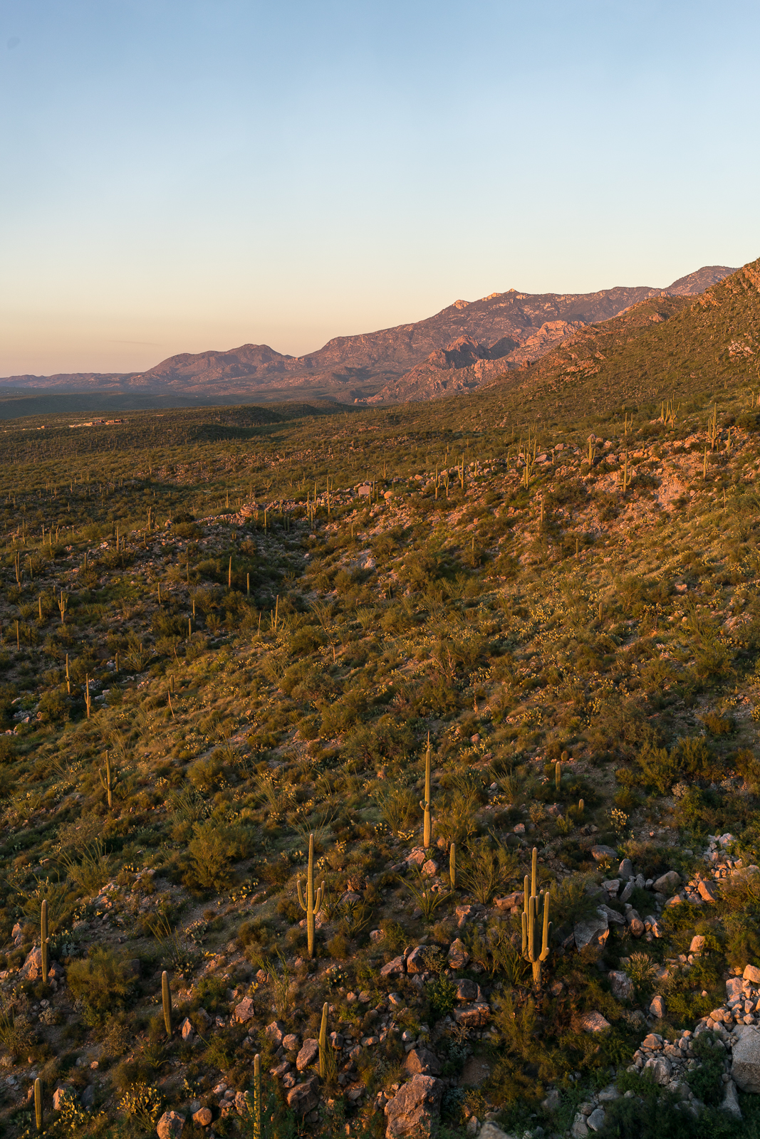 Looking across the Pusch Ridge Wilderness towards Charouleau Gap from near the Linda Vista Trails. September 2016.