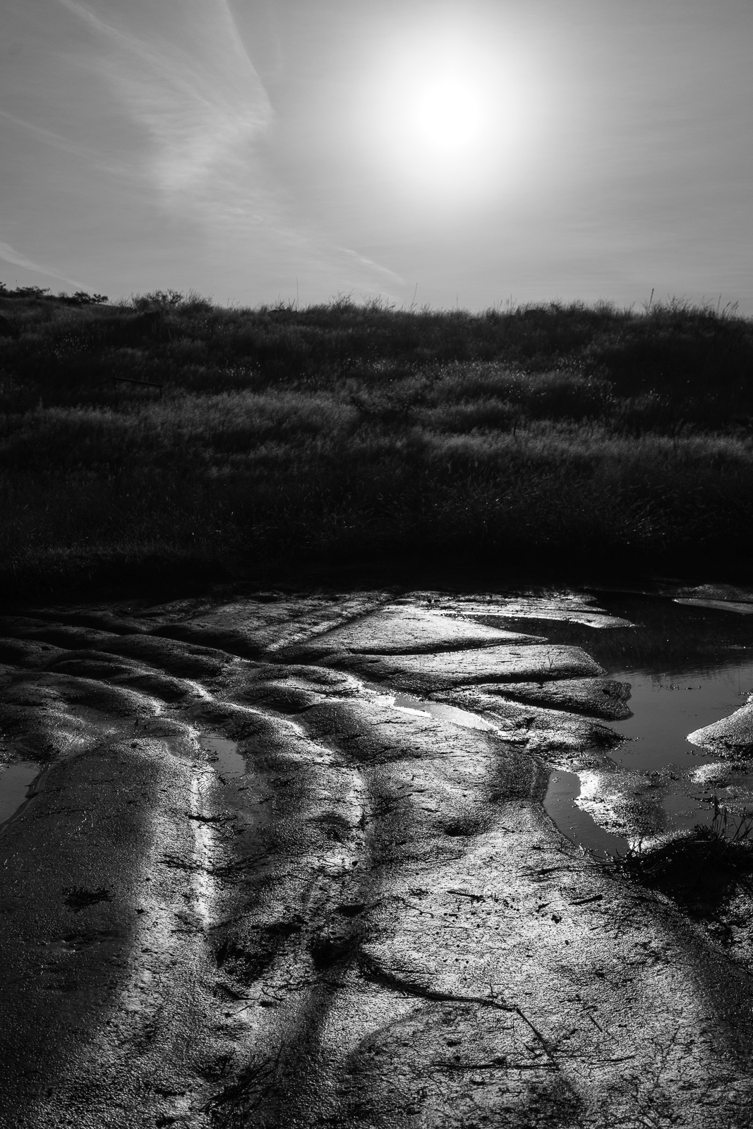 Sun and mud beside Race Track Tank - north of Redington Road. October 2016.