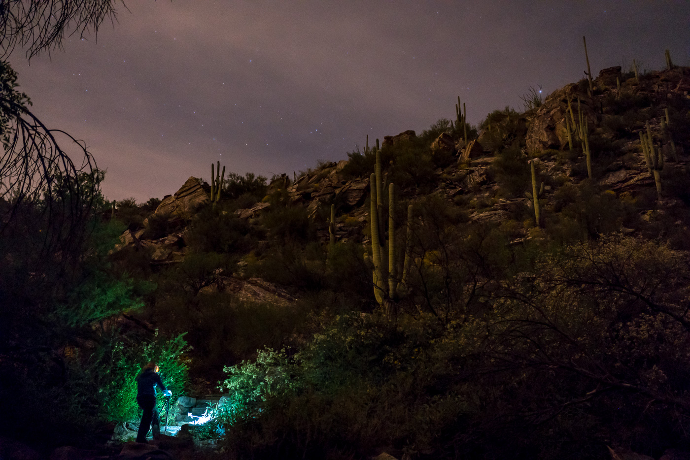 Capturing Images at night in Sabino Canyon. March 2017.