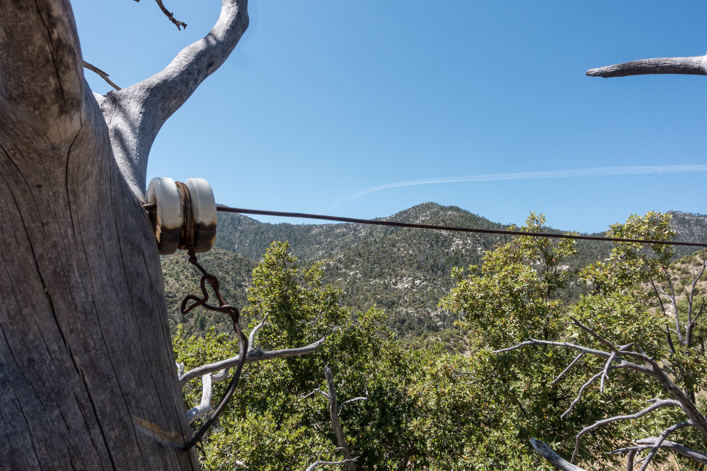 Remains of the phoneline from the 1910s that came up from Tucson and over to the Brush Corral Ranger Station. April 2017.