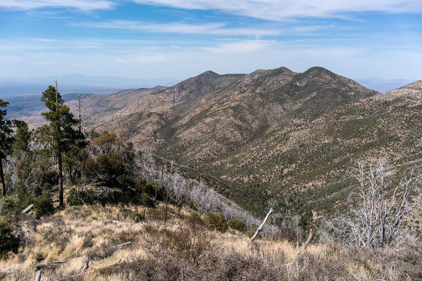 Oracle Ridge and Rice Peak from the Red Ridge Trail - the Catalina Camp Trail can be seen descending from Oracle Ridge towards its junction with the Red Ridge Trail. April 2017.