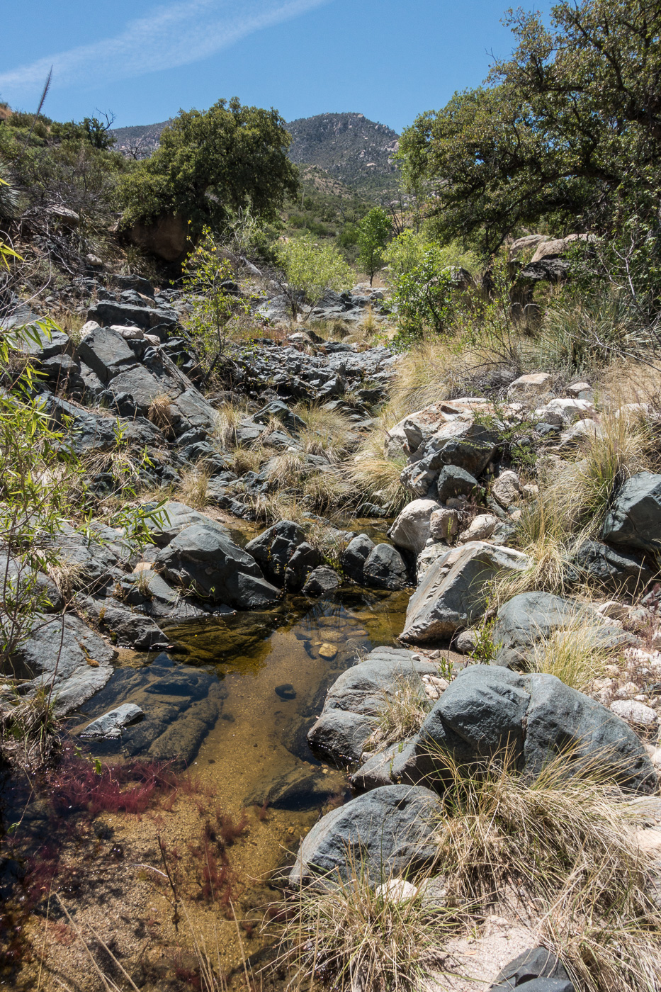 Water in a canyon along the Brush Corral Trail. April 2017.