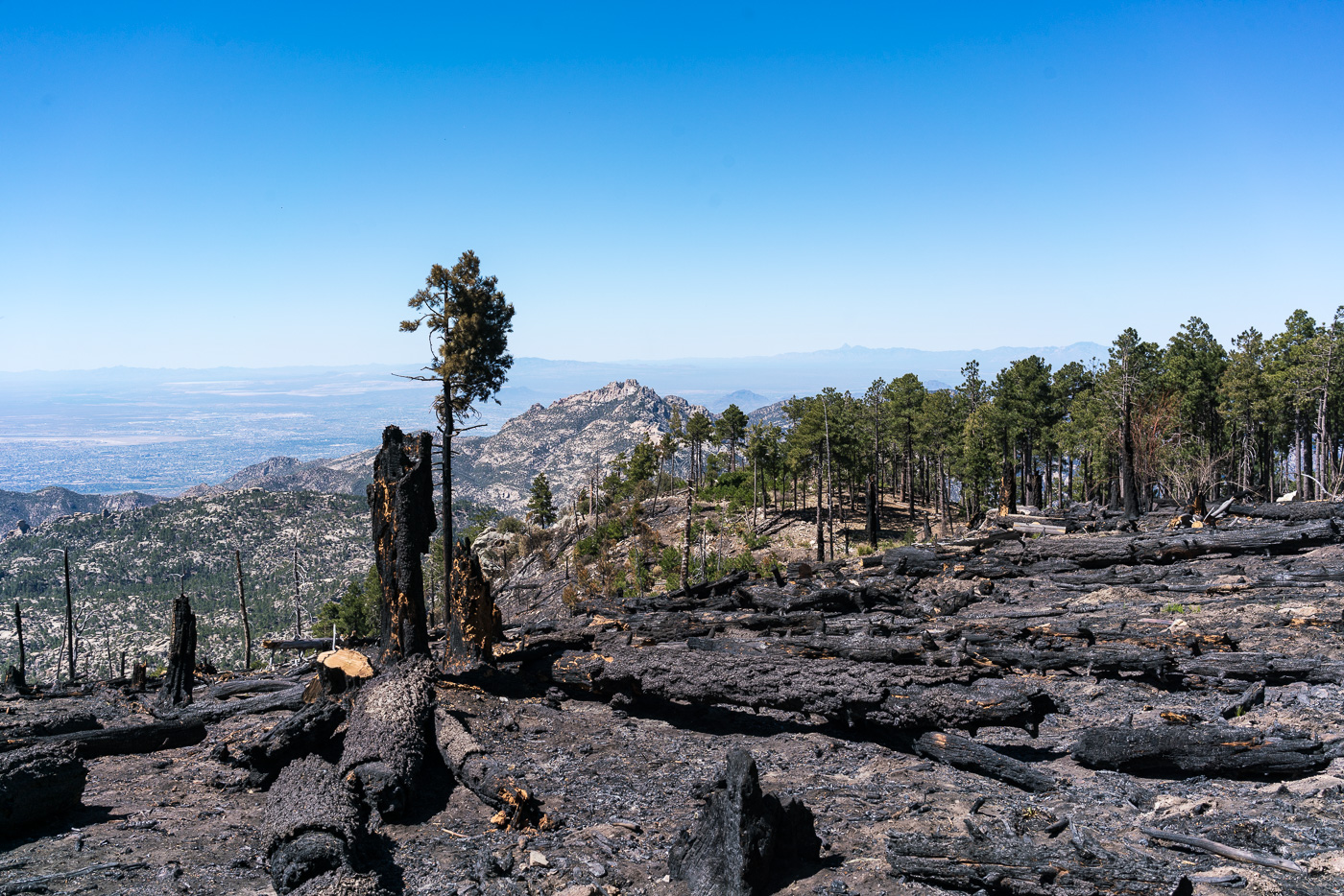 Fire damage along the Mount Lemmon Trail - probably from the Shovel Fire. May 2017.