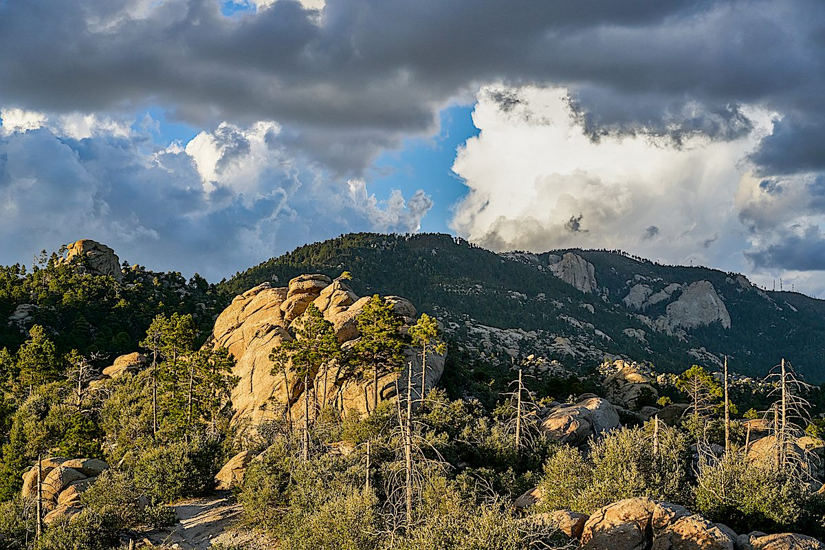 Near the junction of the Wilderness of Rock and Mt. Lemmon Trails. September 2017.