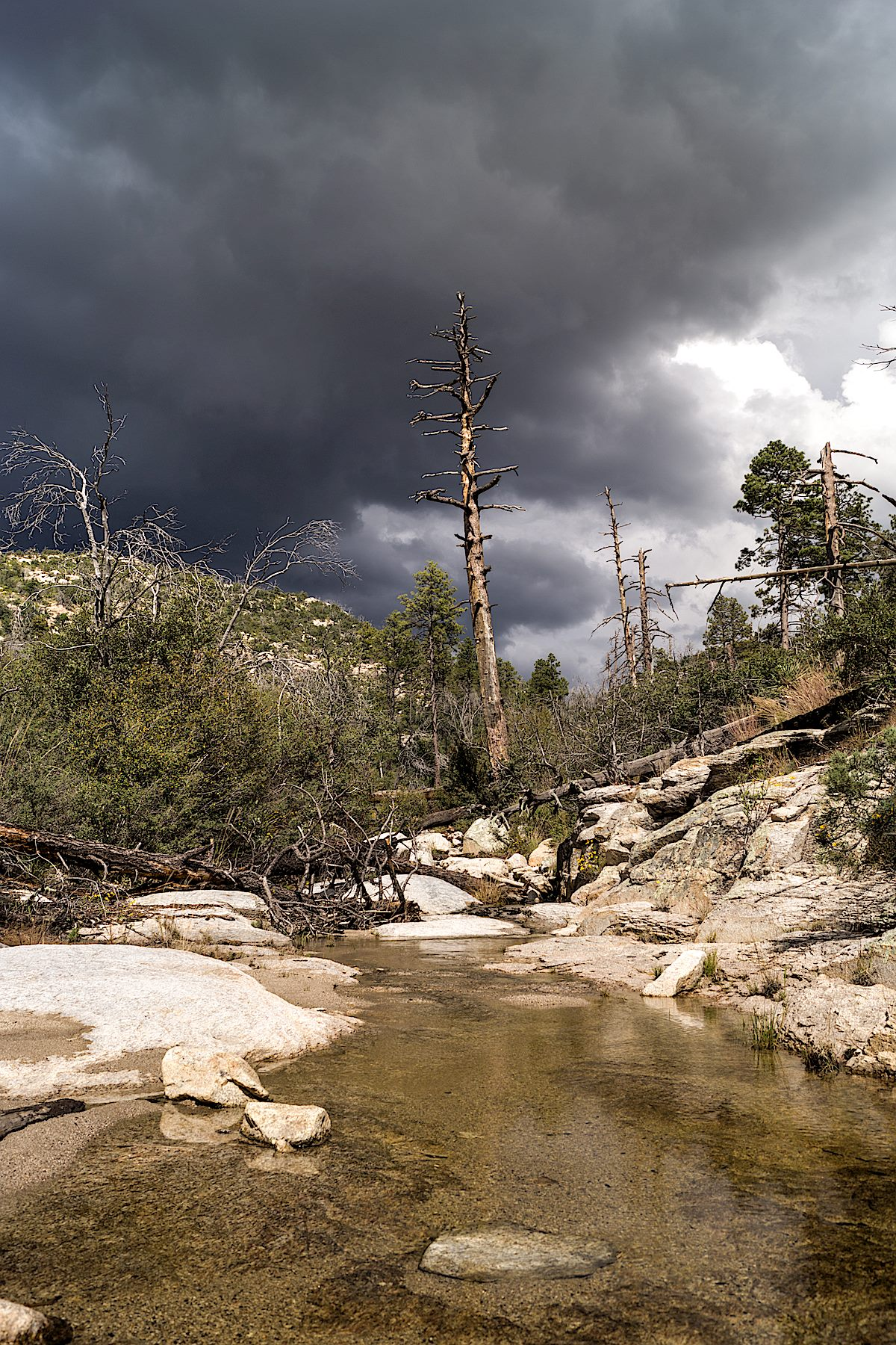 Looking up Pine Canyon into the approaching storm. October 2014.