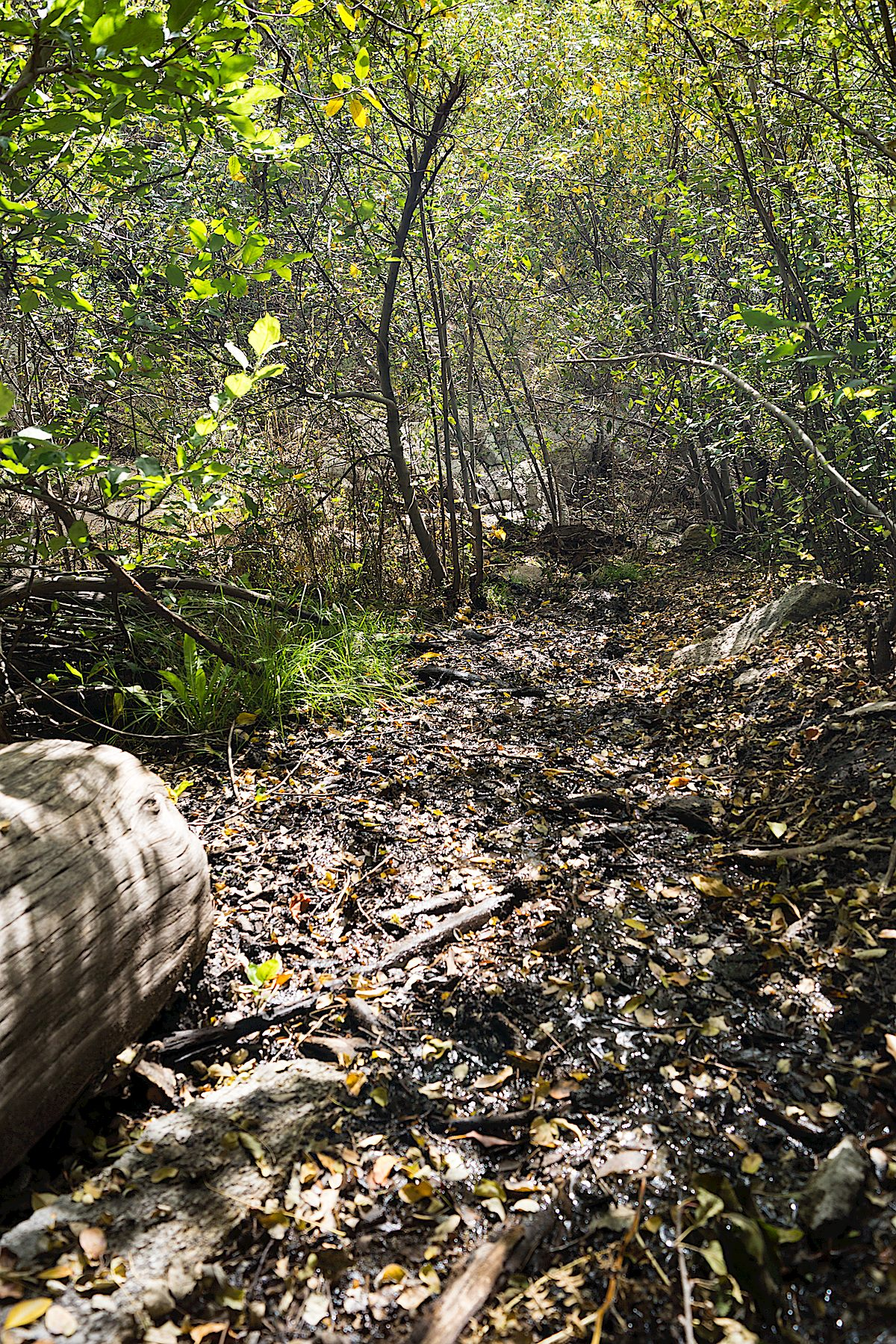 The Palisade Trail - wet and muddy below Mud Spring. October 2014.