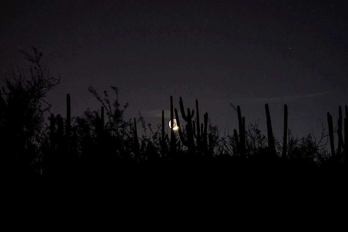 Moon thru the Saguaros near the start of the trail. March 2015.