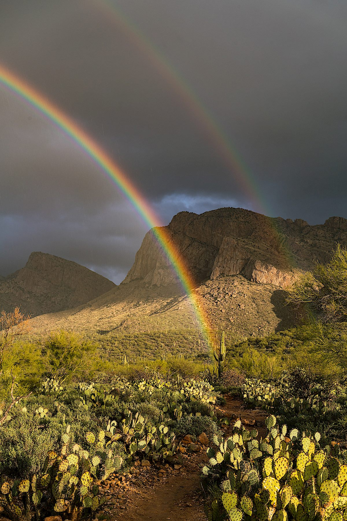 Rainbows from the Linda Vista Trail in Oro Valley - here the wilderness boundary is less than a minute from Oracle Road. January 2017.
